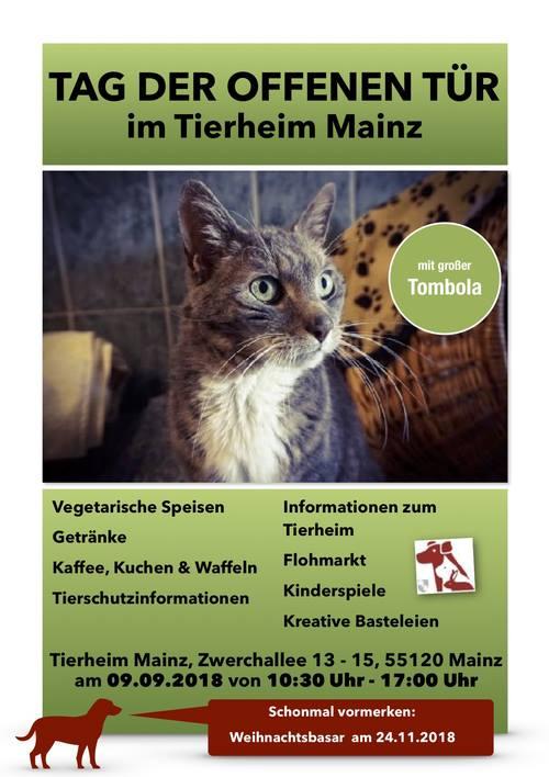 tierheim mainz