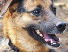 hund-bodhin